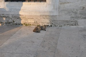 Cat in Eyup Sultan Mosque